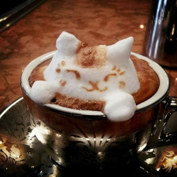 Latte Kitty