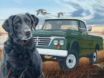 Black Dog in Pickup