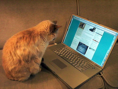 The real writer of this blog...