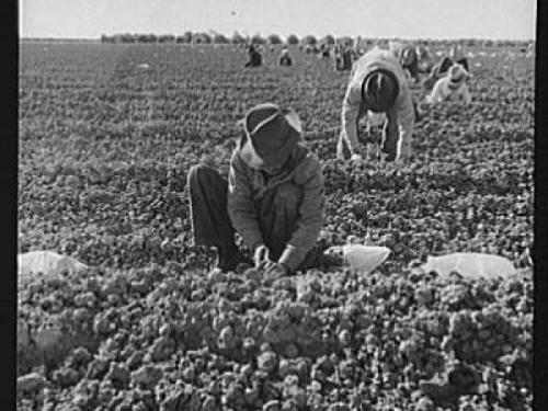 Depression workers in field
