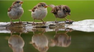 cute-sparrows