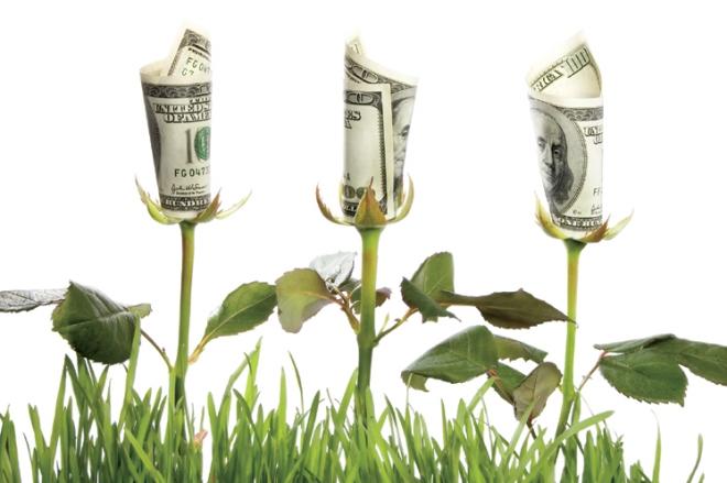 financial garden