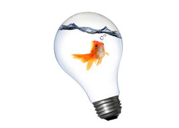 Fish in lightbulb