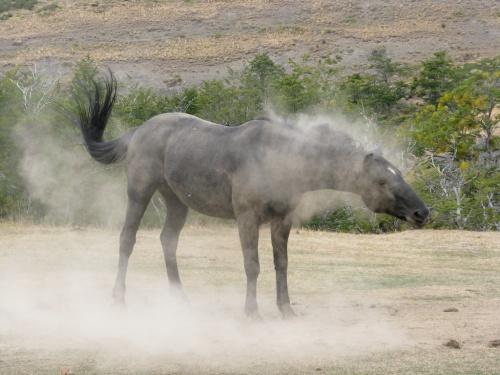 horse-shaking