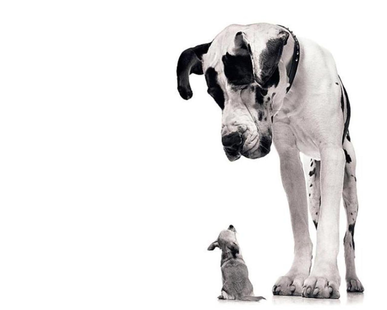 big-dog-and-little-dog