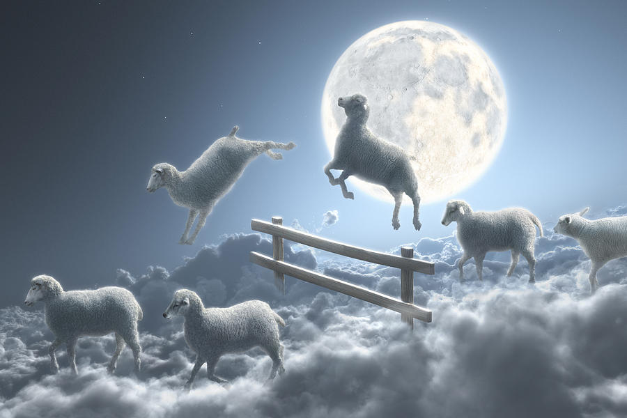 Sheep jumping.jpg