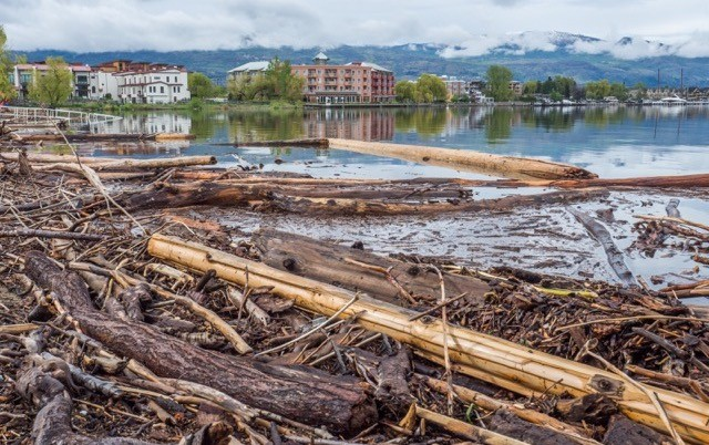 Logs on Okanagan Lake