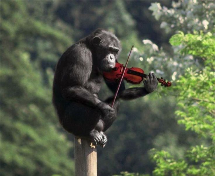 monkey violin.jpg