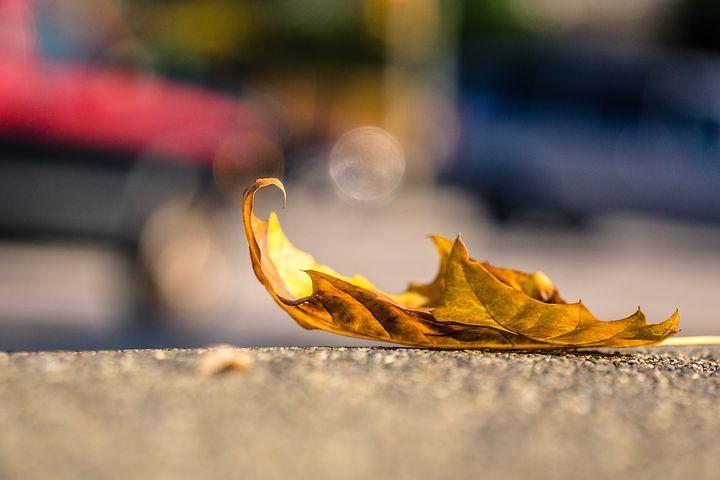 rough edges leaf.jpg