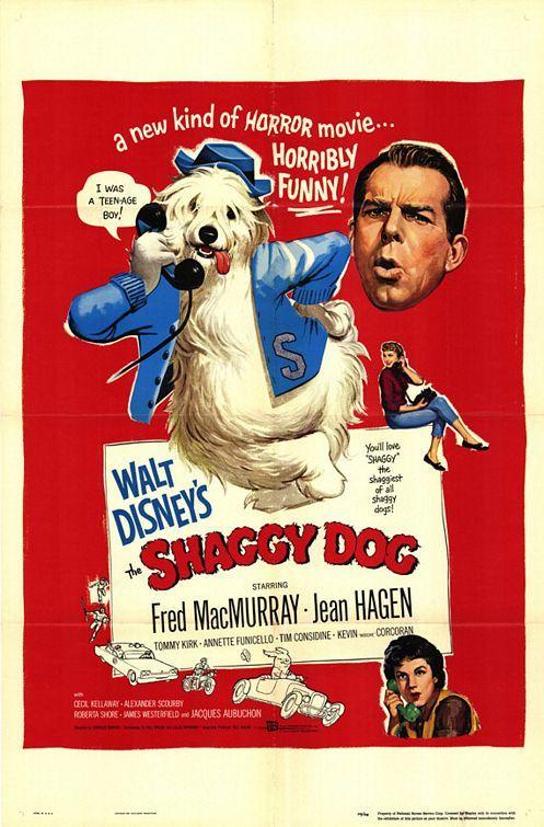 Shaggy Dog.jpg