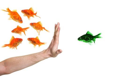 discrimination-fish.jpg