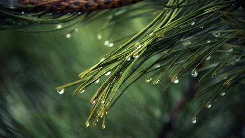 rain in the pines.jpg