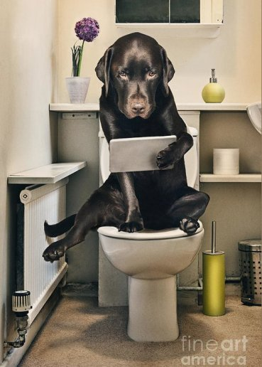 Dog on toilet