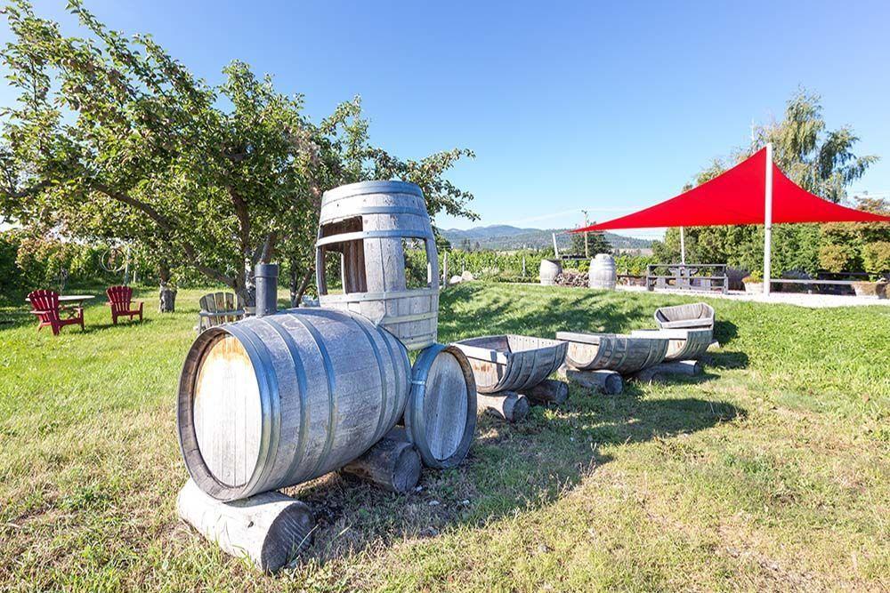 8th gen vineyard.jpg