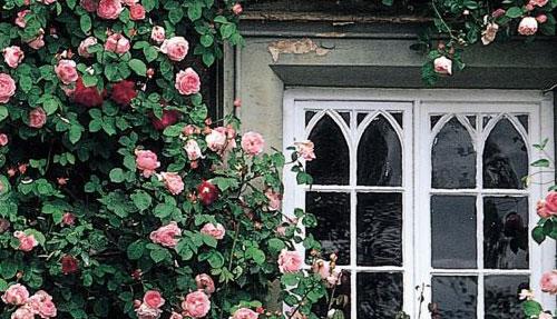 rose at window.jpg