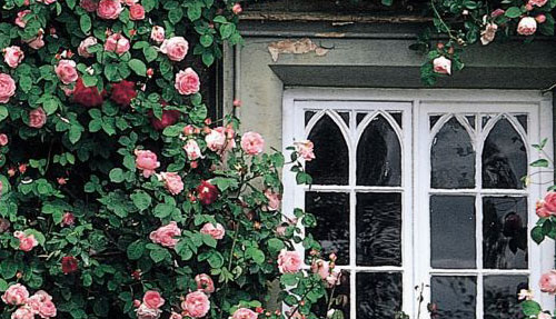 rose at window.jpg