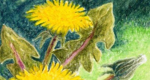 dandelion.jpg