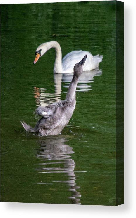 goose watch